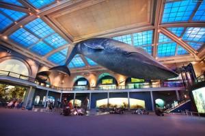 American Museum of Natural History New York ferias visite